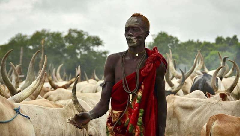 child marriage sudan inflation cows