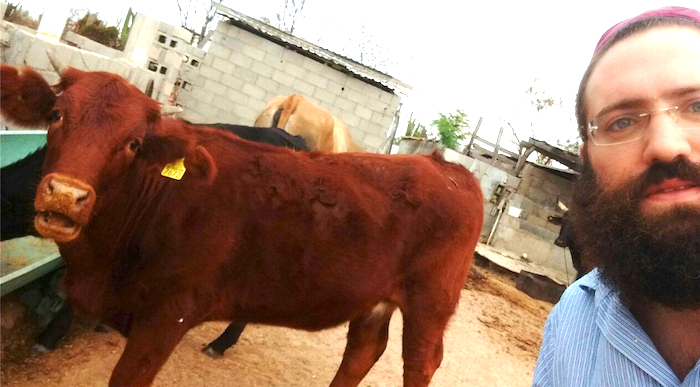 Birth of Red Cow in Israel Signals End of the World