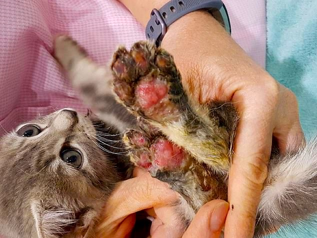 Another Migrant Walks Free After Horrifically Torturing Defenseless Kitten